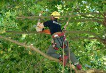 pourquoi elaguer ses arbres